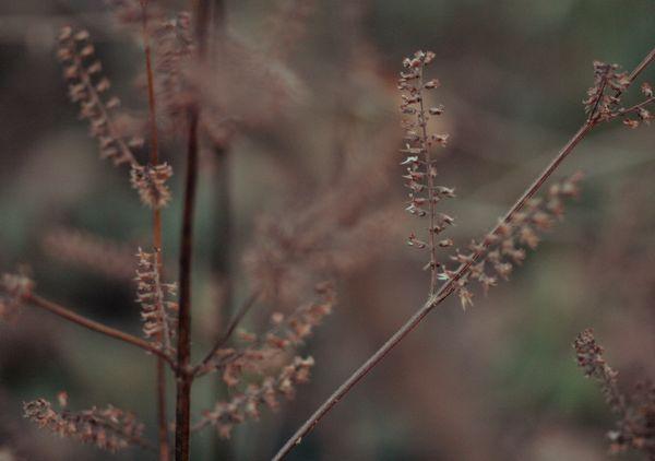 Autumnbrush