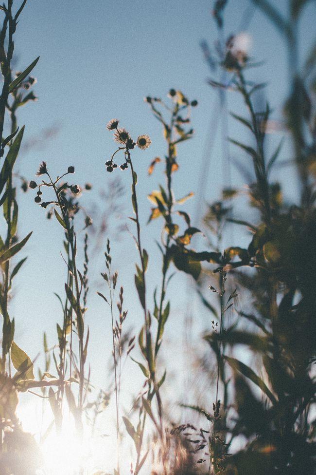 Grass2 (1 of 1)