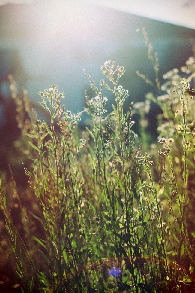 Grassgoldenhour